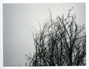 jan-19-bare-tree0201