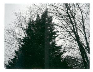 jan-19-big-evergreen0223