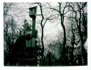 jan-19-birdhouses-and-trees0212