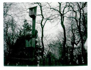 jan-19-birdhouses-and-trees0212